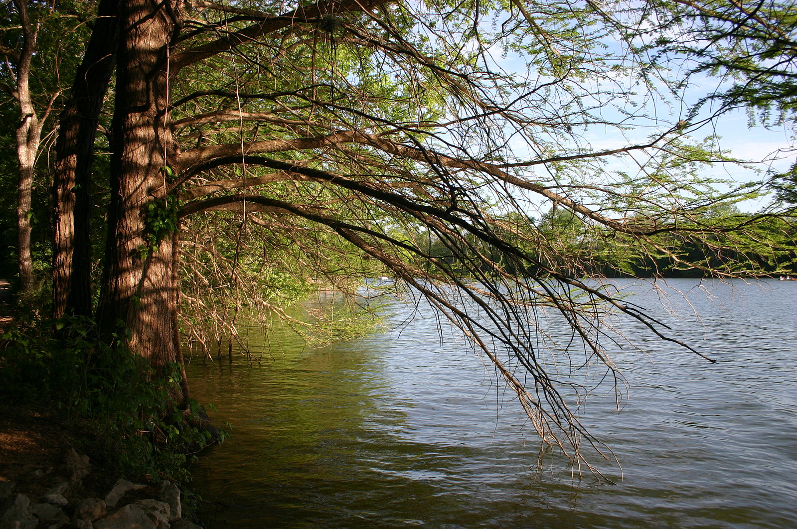 Photo of trees over a water body: example of a terrestrial-aquatic interface