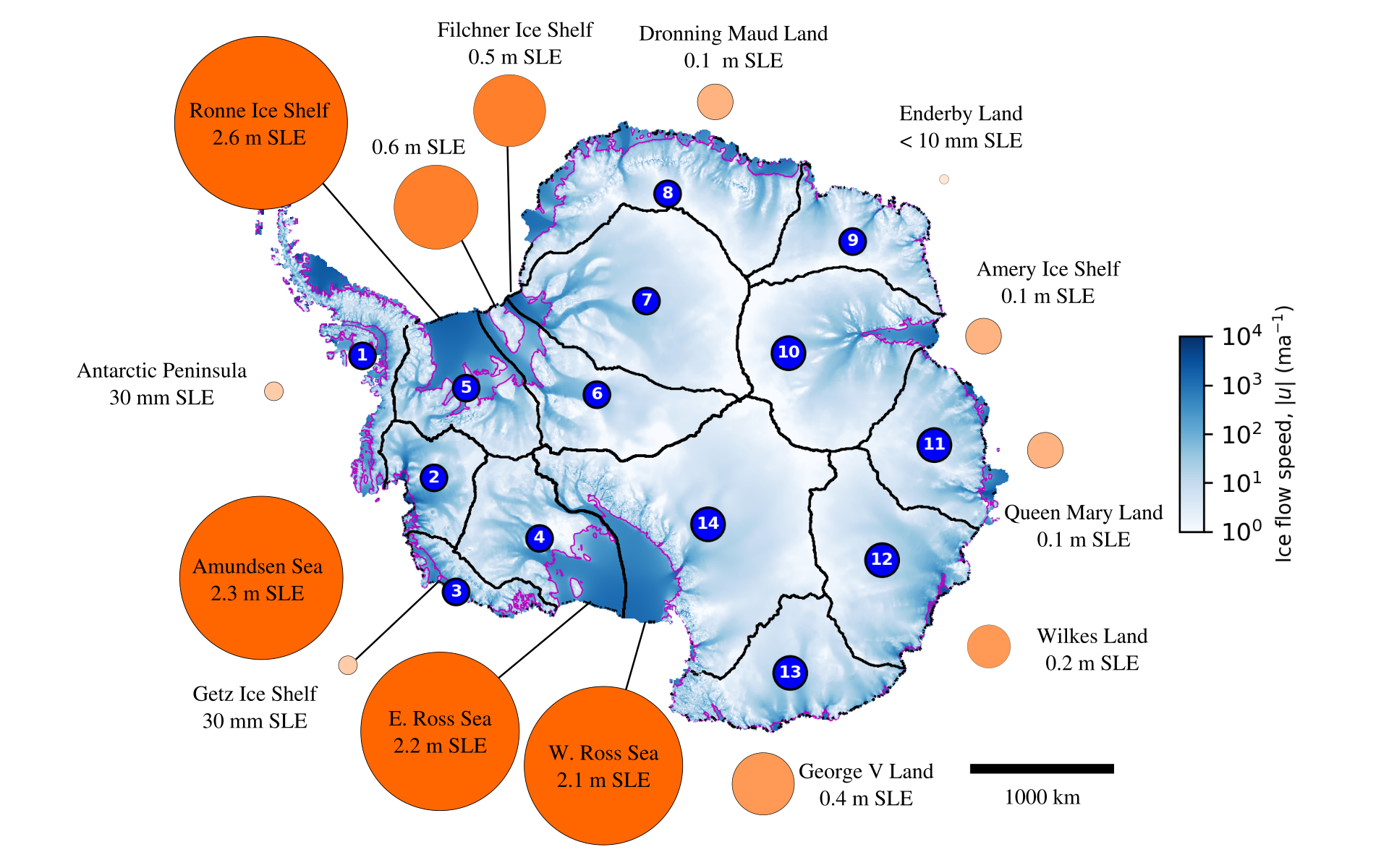Vulnerability of the Antarctic ice shelf to regional ice shelf collapse