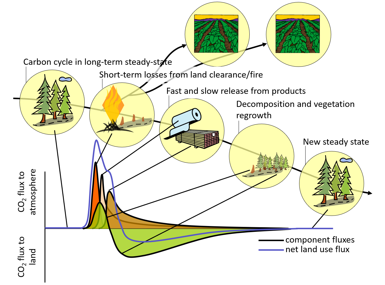 Theoretical response of land-atmosphere carbon exchange after a managed (human) disturbance