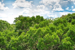 Amazon forest response to CO2 fertilization