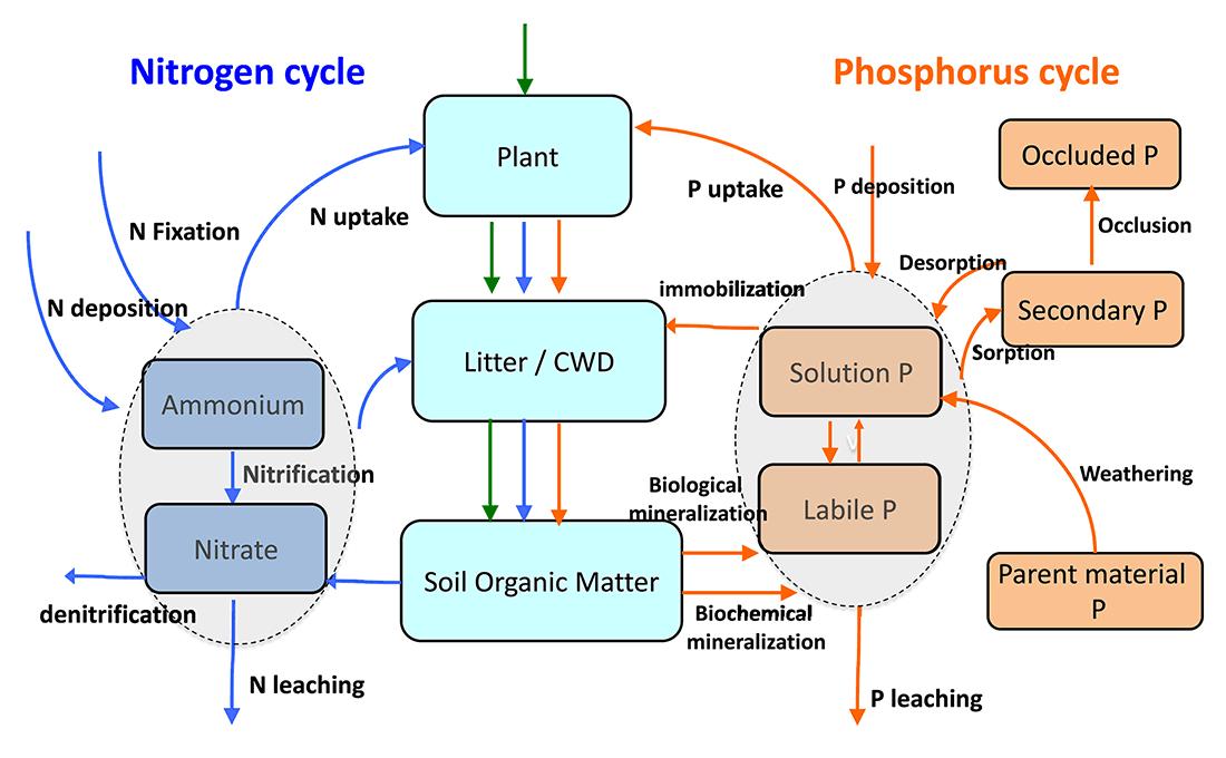 ELM v1 diagram