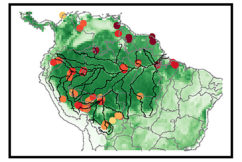 Effects of Phosphorus Cycle Dynamics on Amazon Carbon Sources and Sinks