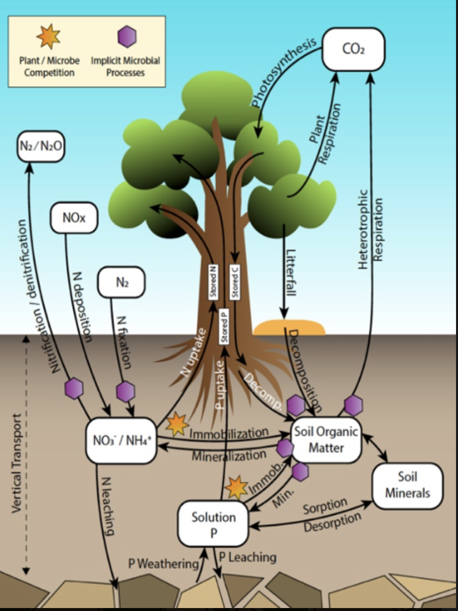 Biogeochemical processes in the E3SM Land Model (ELM)