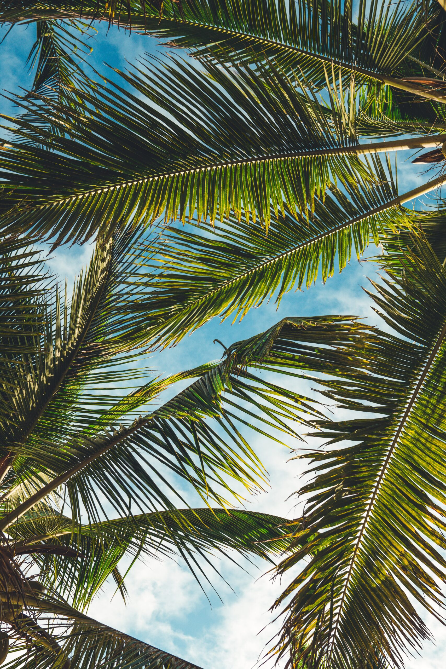 Image of palm trees: a new study identifies the tropics as area with more frequent record-breaking hot years